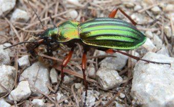 Не трогайте их: каких жуков нельзя выводить с участка