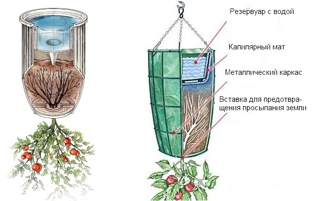 Pomidory_v_vedrah
