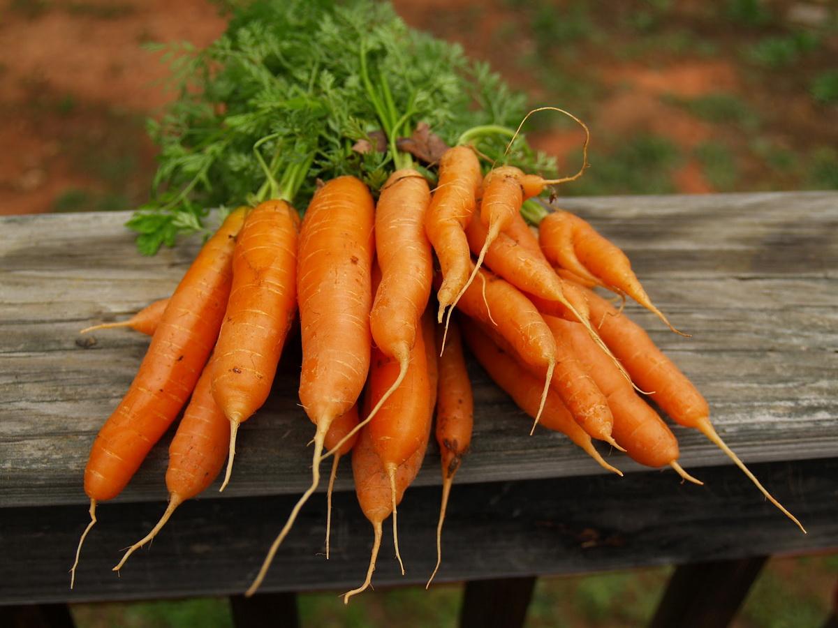 заготовка моркови
