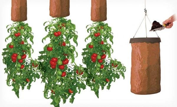 pomidory vverh tormashkami grunt
