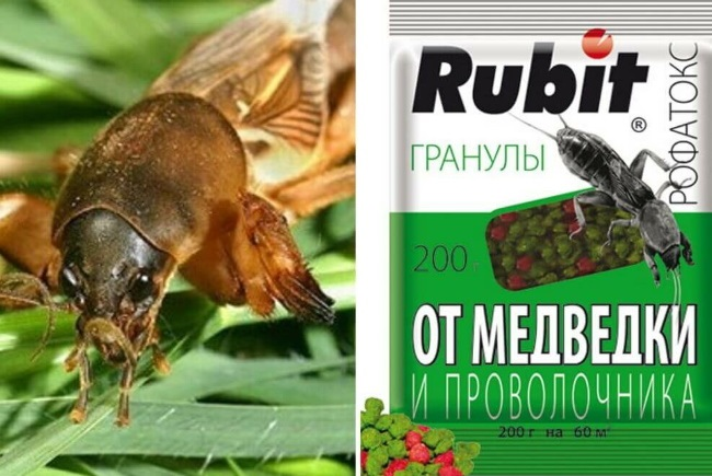 rubit
