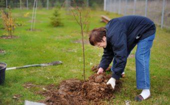 садить деревья осенью