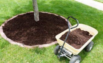 защита корневой системы