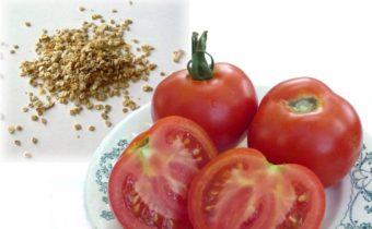Правила заготовки семян томатов самостоятельно из собранного урожая