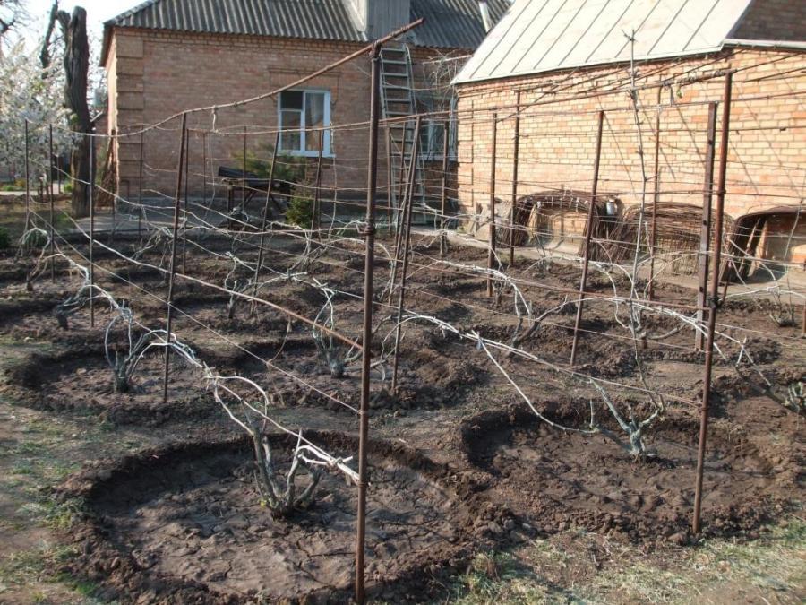 Как подготовить шпалеры для винограда осенью