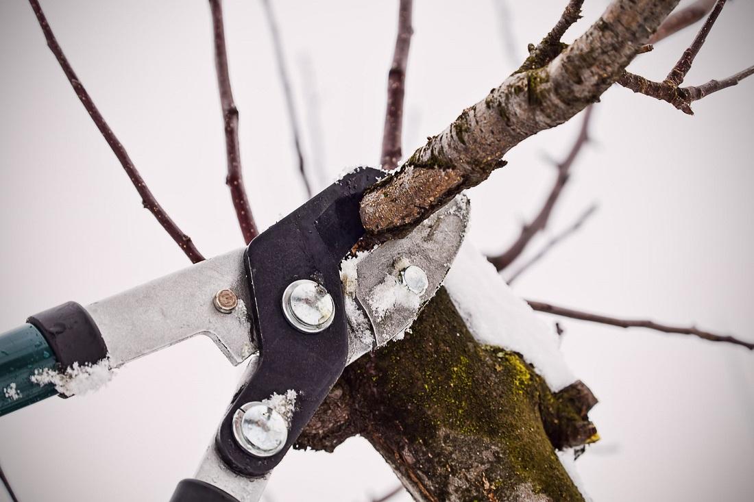 Показания к обрезке деревьев в зимний период