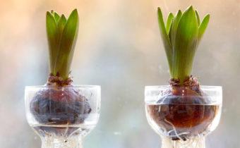 Когда посадить цветы, чтобы они зацвели к 8 марта