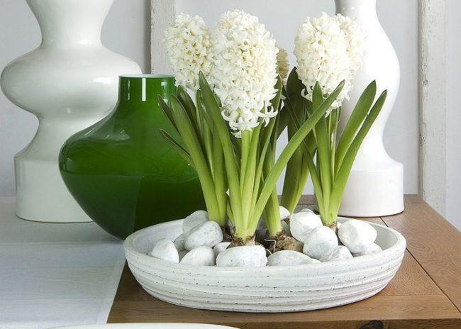 цветущие гиацинты к 8 марта