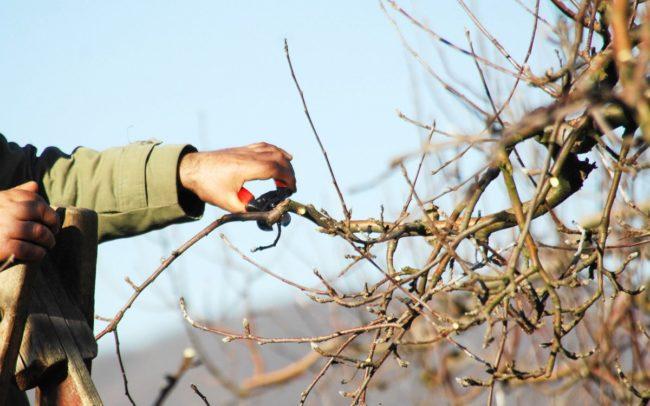 как стричь деревья