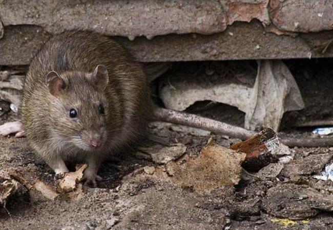 krysy v pogrebe