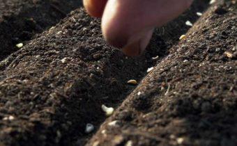 Как правильно сеять семена овощей в открытый грунт осенью