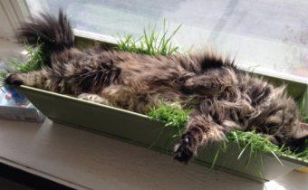 Защищаем рассаду от кошек