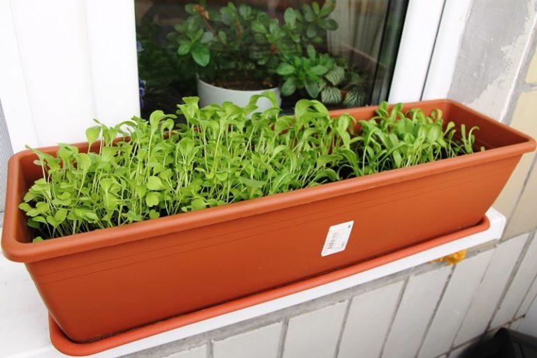 вредители на рассаде томатов на подоконнике