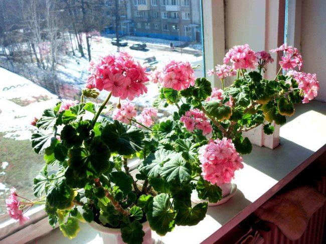 Домашние цветы в зиму