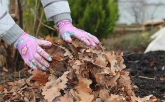 использовать опавшие листья