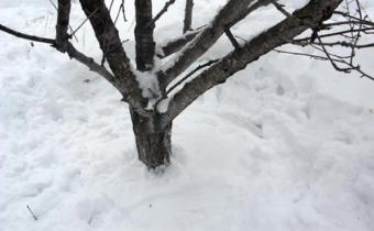 Снег вокруг деревьев