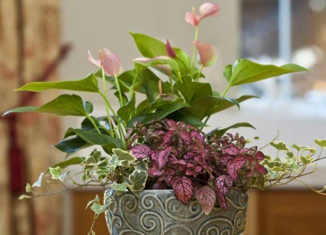 Секреты совместимости домашних цветов