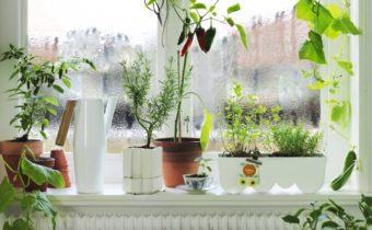 Проветриваем комнату зимой без последствий для цветов