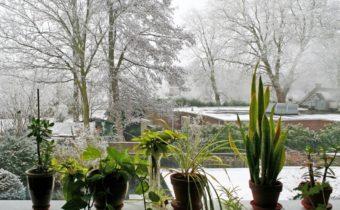 комнатные растения зимой