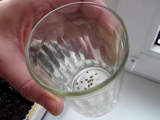 обработка семян в перекиси водорода