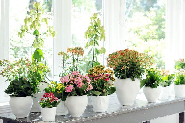 Самые экзотические цветы на вашем подоконнике