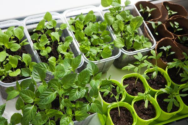 Сорт овощей и сроки посадки