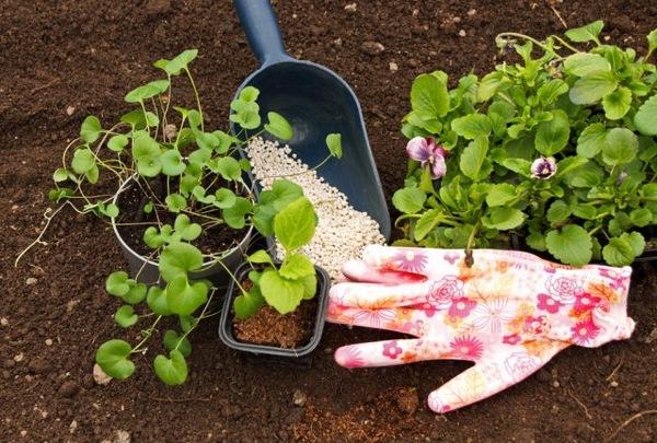 Какие удобрения стоит внести в цветники в марте