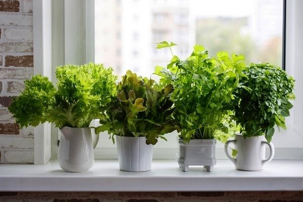 Выращиваем зелень к новому году