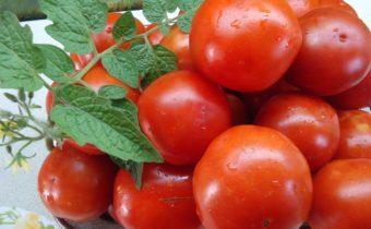 Жароустойчивые томаты