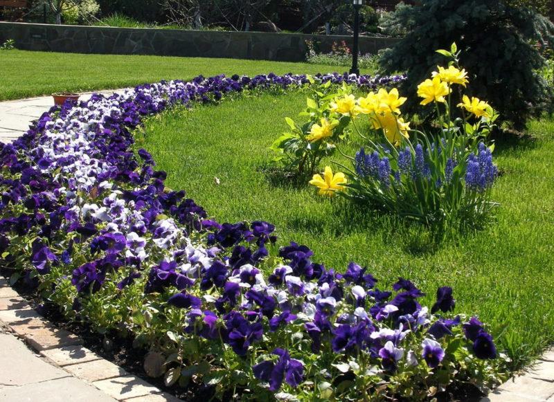 Выбираем семена бордюрных цветов для рассадного способа выращивания