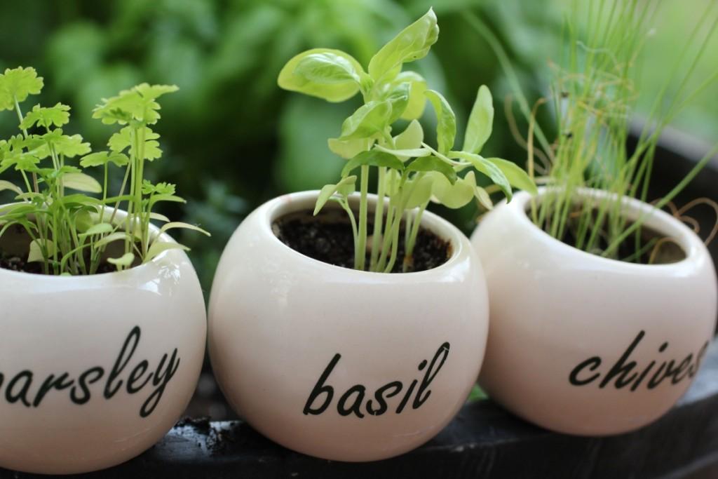 Выращивание пряностей и специй: как подобрать идеальный грунт