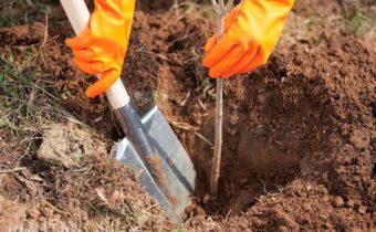 Оптимальные сроки начала посадки деревьев весной с учетом климата