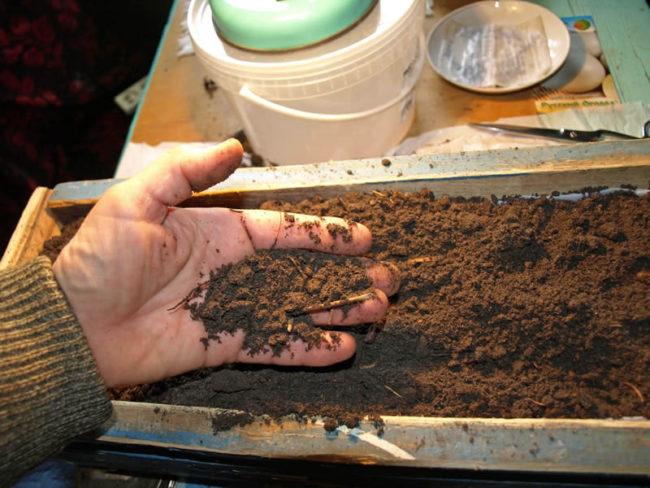 проверка состава почвы дома