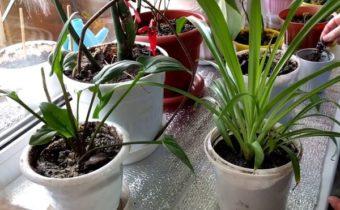Вирус на подоконнике: как распознать заболевания на растениях