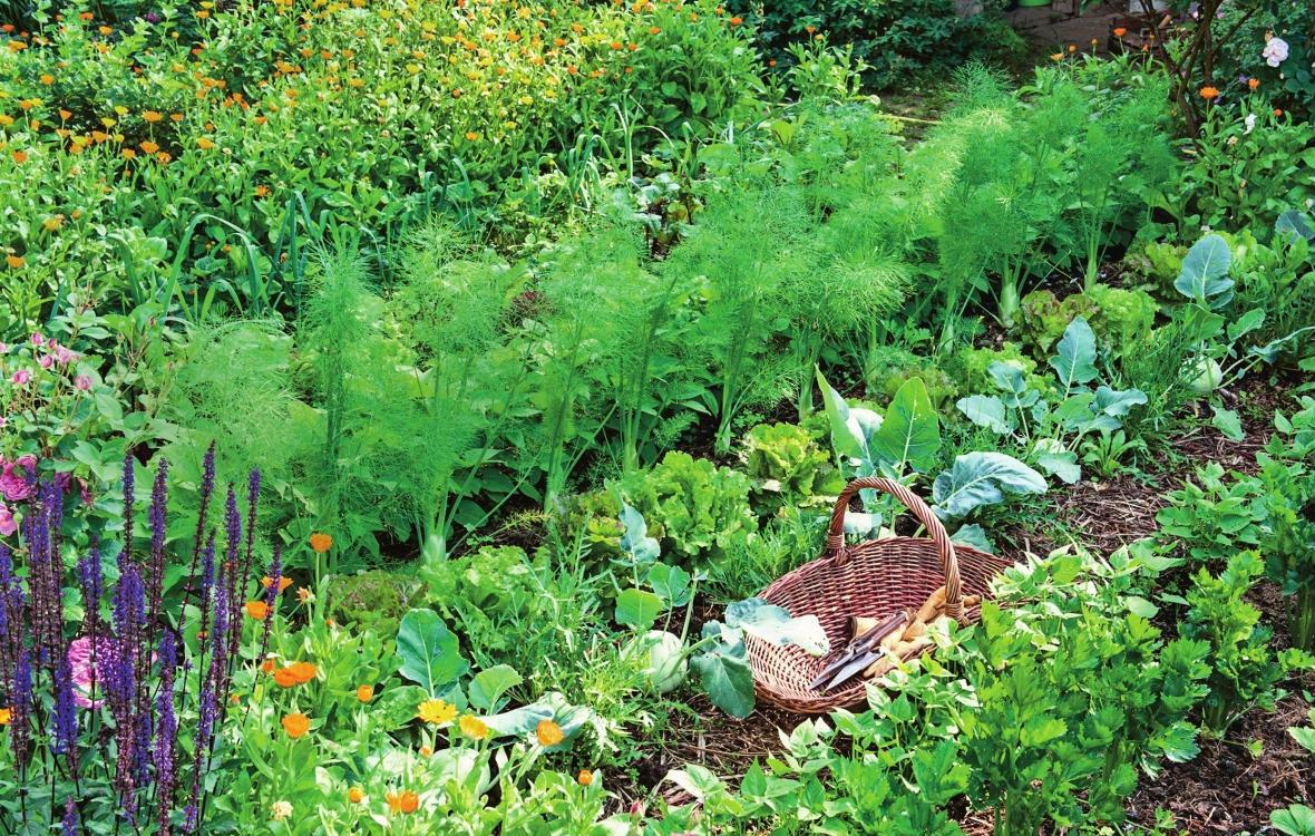 зелень в огороде что посадить с фото