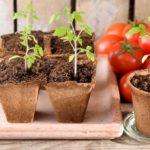 Благоприятные дни для посадки томатов в марте 2020 года по лунному календарю: оптимальные сроки и особенности выращивания