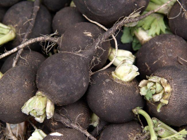 урожай черной редьки