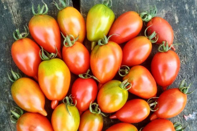 Легенда Тарасенко томат