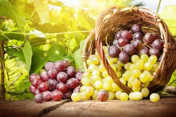 Подборка лучших сортов винограда без косточек