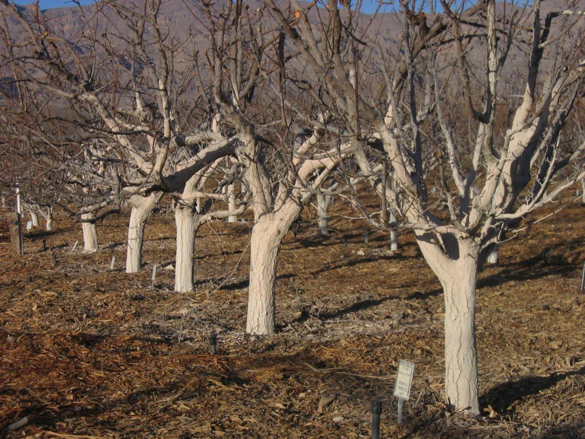 Весенний осмотр дерева: как понять, что ветки дерева замерзли за зиму