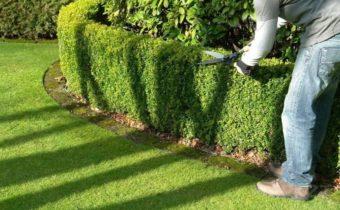 Из чего лучше сделать живую изгородь: выбираем низкорослые кустарники