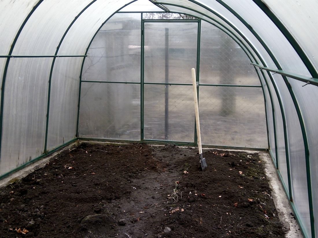 Чем грозит усталость почвы в теплице и можно ли этого избежать