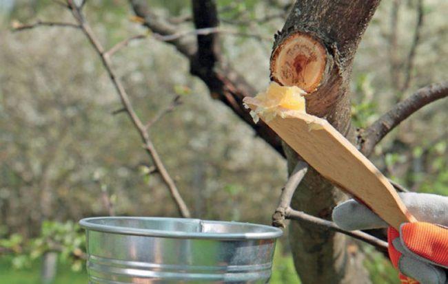 реанимация плодового дерева
