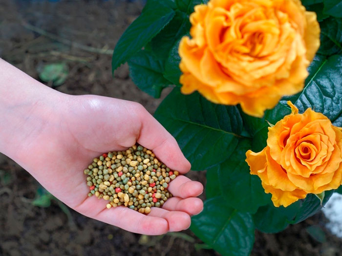 Лучшие варианты подкормки цветов весной