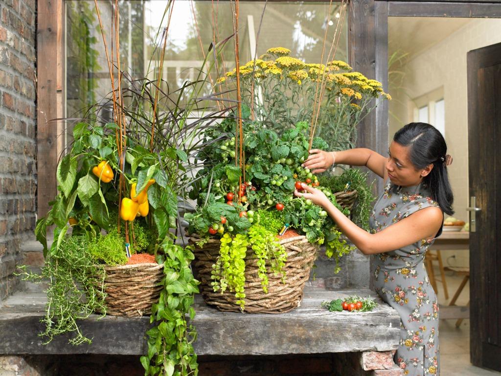 Выбираем лучшую тару для выращивания овощей на балконе