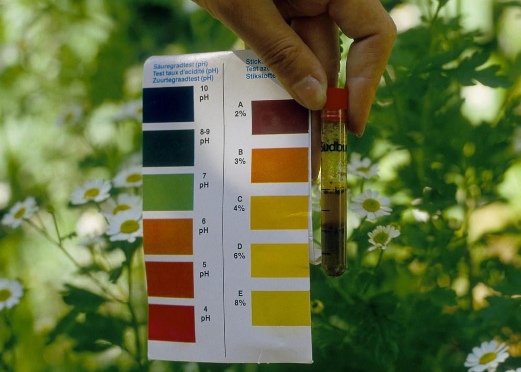 Самые достоверные способы проверки кислотности почвы