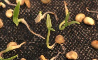 Как ускорить проращивание семян: 10 эффективных методов