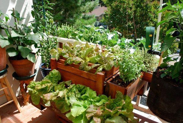 Посадки на балконе: что можно вырастить за один месяц