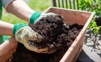 Земля для выращивания рассады