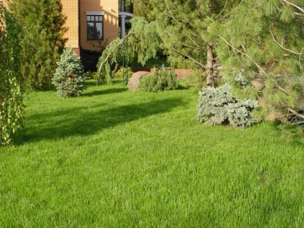 Как выбрать газон для затененного участка